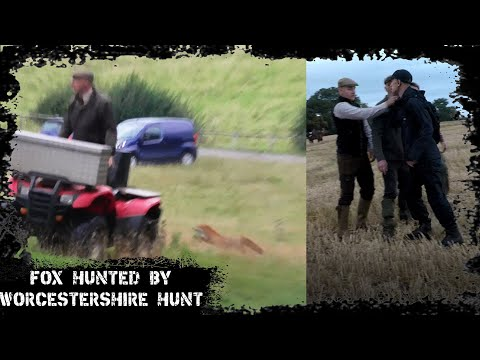Fox Hunted By The Worcestershire Hunt