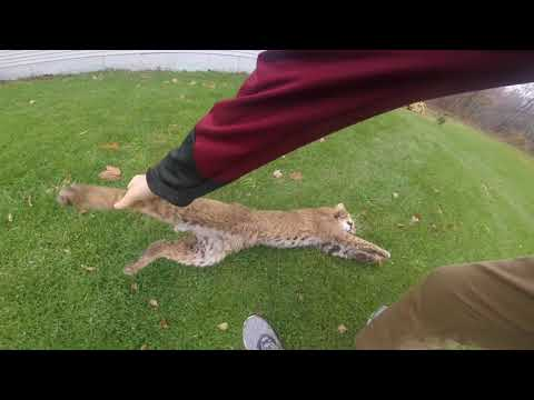 DID HE REALLY CATCH A BOBCAT!!! 2017 Trapping Season -- Blood In the Water Ep4 (Gopro)