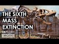 How Humans Are Causing The Sixth Mass Extinction | The Holocene Extinction, Expl