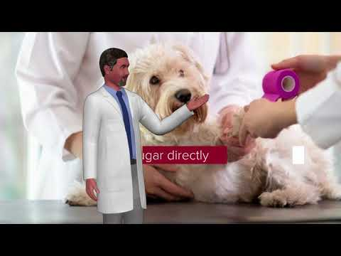 How Do We Help The Animal? Sugar To Heal Wounds In Dogs