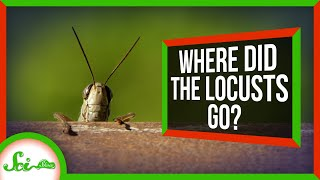 How Farmers Accidentally Killed Off North America's Locusts