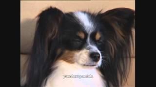 ТОП 10 самых умных собак в мире.
