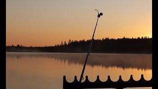 РАДИ ТАКИХ ПОКЛЕВОК СТОИЛО СЮДА ЕХАТЬ Рыбалка с ночевкой на карася Карась пришел на прикорм