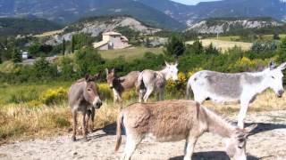 Village Vacances Rosans