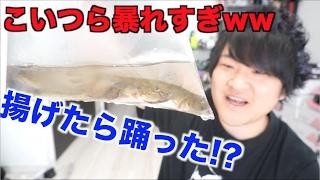 暴走!!大量の暴れハゼを天ぷらにして食べよう!!
