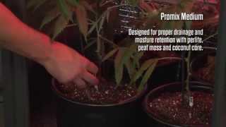 Growbox Cultivation: Technique