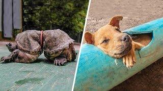 8 Tiere, die wegen Menschen in Schwierigkeiten geraten sind!