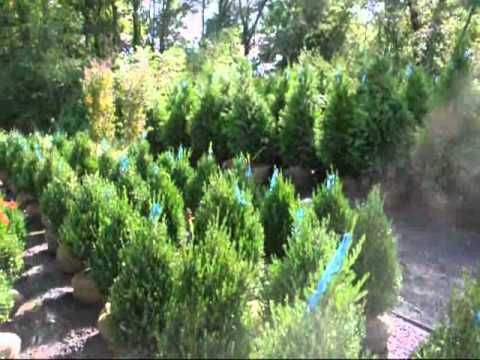 plants that grow well in shade burning bushes, Natural flower