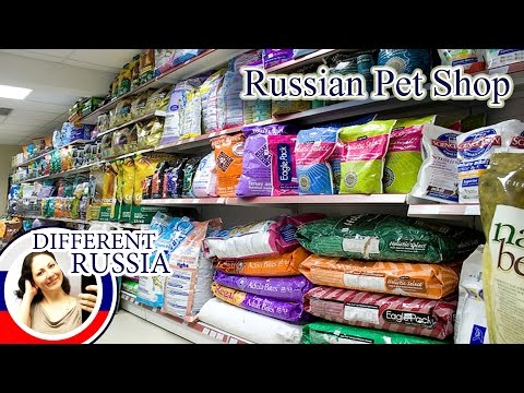 Shopping in Russia: What Can you Buy in Russian Pet Shop? #DifferentRussia