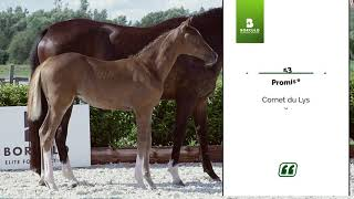 Download 2020 collection | 53. Promise (Cornet du Lys x Indoctro)