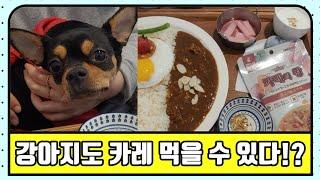 강아지 카레 공짜로 먹는방법!! 애견동반 식당 방문기♥