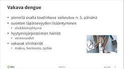 Dengue kuume Asiantuntijalääkäri Elina Erra