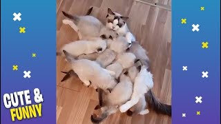 Cute and Funny Animals videos Compilation #9 Cutest Animals