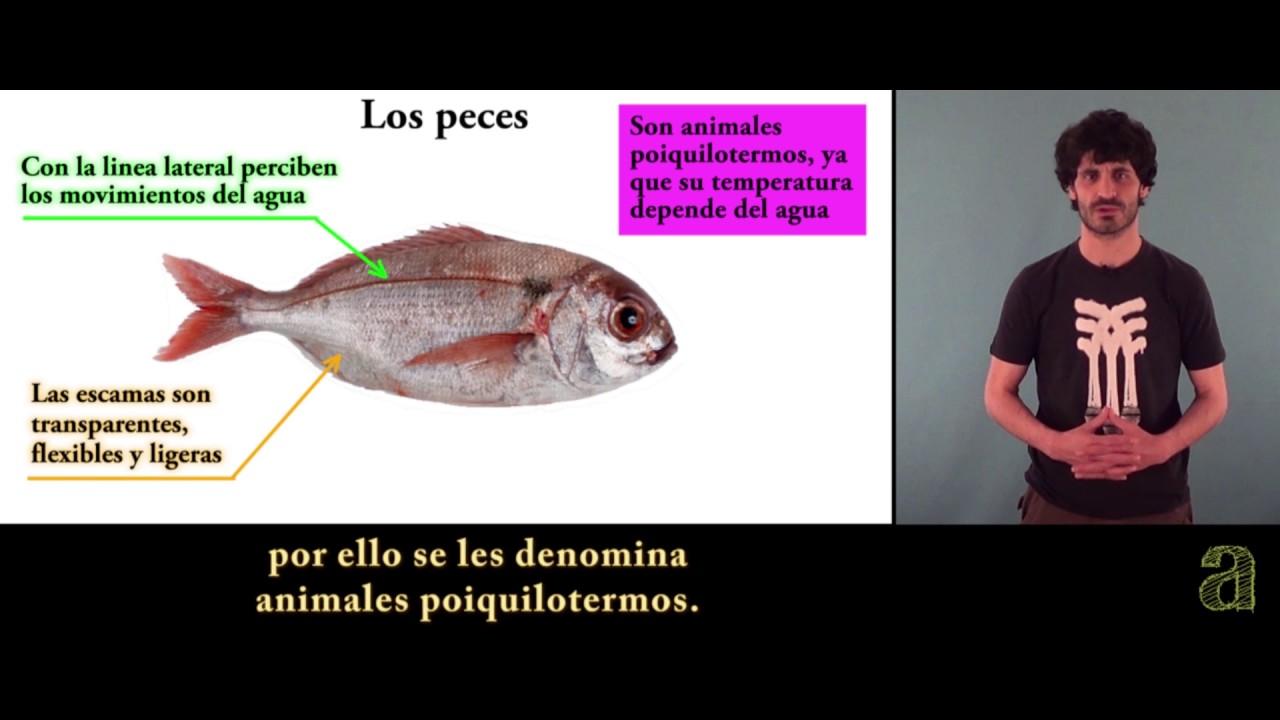 Los vertebrados I (Tema) - YouTube