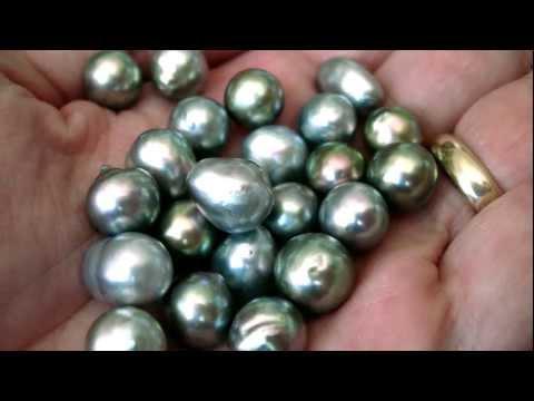 The Sea Of Cortez Pearl Video (in HD)