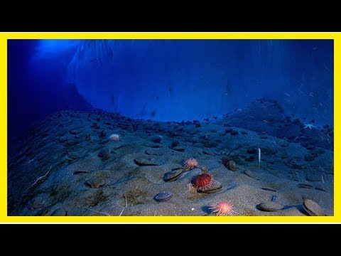 New xprize challenge seeks next-generation robots to map the ocean floor