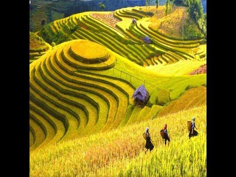 Du lịch sapa vẻ đẹp thiên nhiên  - Vietnam Discovery