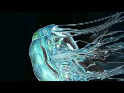TRIΔLS   Jai Paul   Flume (Official Music Video)