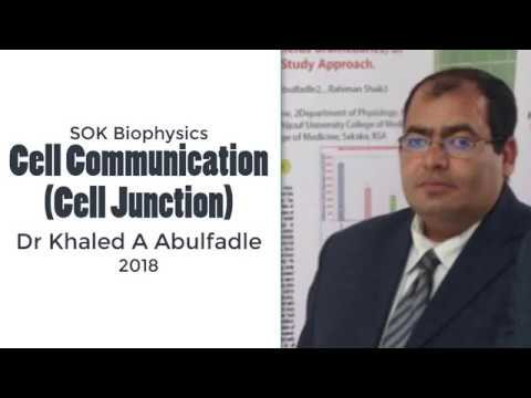 Cell Communication (cell Junction) (10-2018) By Dr Khaled A Abulfadle