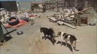 Навес строится  IDEA привезла собак  Вкусные макарошки на ужин