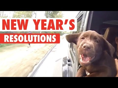 New Year's Resolutions As Told By Pets