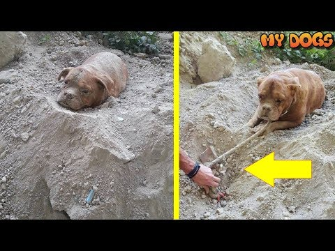 Dejected Dog Who Was Buried Alive Rescued by Hero Man