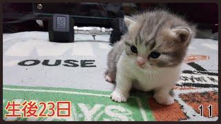 【強烈】激しすぎる母猫の愛 thumbnail