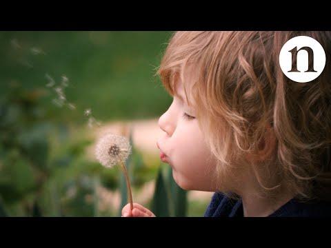 Watch the Weird Way Dandelion Seeds Float in a Wind Tunnel