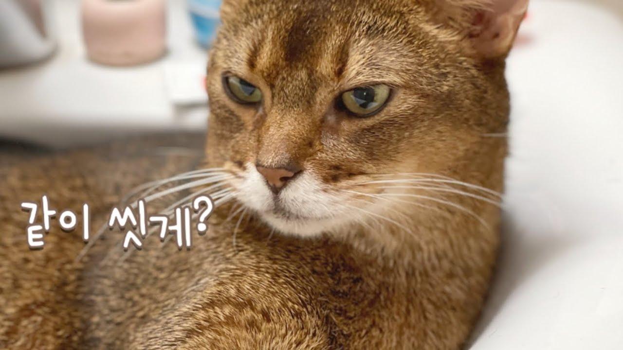 세면대에 있는 고양이에게 물을 틀어줬을 때 반응