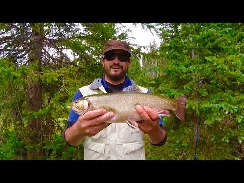 Colorado Wickedfisha- S2E5:  Huge Alpine Trout In The Flattops Wilderness