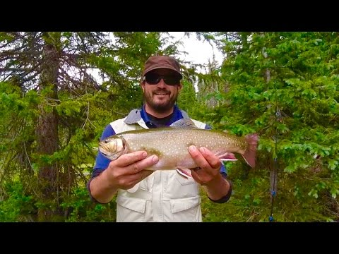 Colorado Wickedfisha- S2E5:  Huge Alpine Trout In The Flattops Wilderness