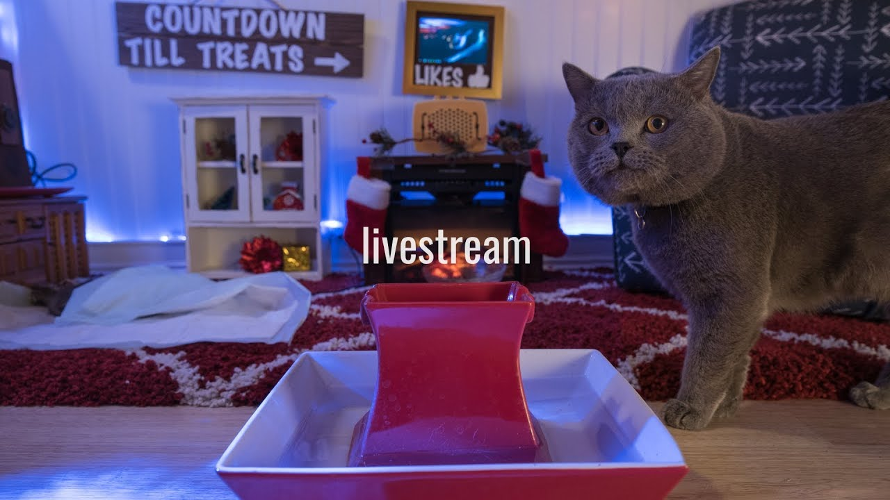 Live Stream Kitten Christmas Special