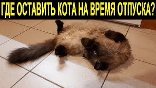 Где оставить кота на время отпуска | Где оставить кошку на время отпуска