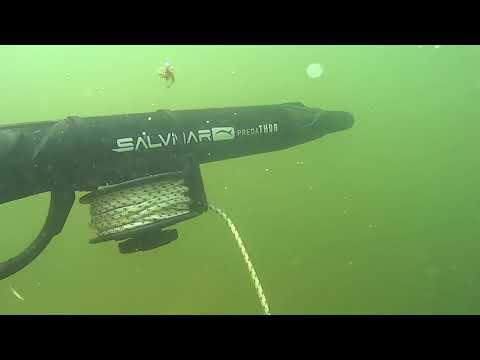 Подводная охота в мутной воде с коротким ружьем