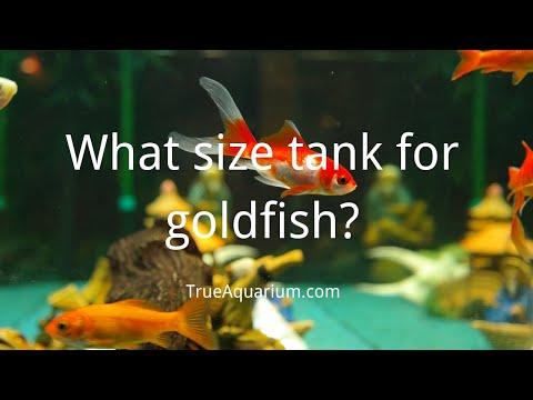 What Size Tank For Goldfish? - Can A Small Tank Choke Goldfish? - Goldfish