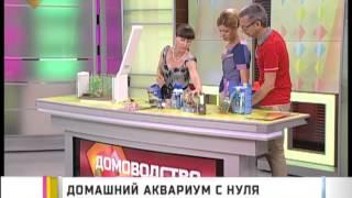 Домашний аквариум с нуля(Домашние питомцы - это большая ответственность, которую готовы взять на себя не все. Но без живности как..., 2013-07-31T06:47:10.000Z)