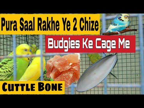 Budgies Ke Liye Pura Saal Cage Me Ye Zarur Rakhe | Benefits Of Cuttlefish Bone | Lahori Namak