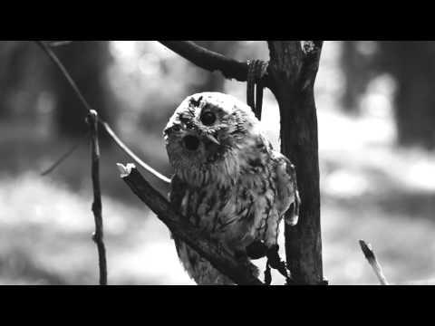 VAKERO - Hombre Gris (Video Oficial)