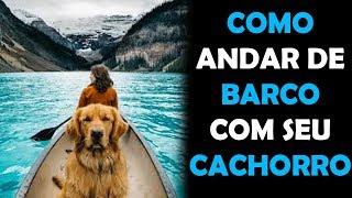 Como Andar de Barco com Seu Cachorro - Cachorro Melhor