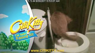 Great Cat Toilet Training Success - CitiKitty