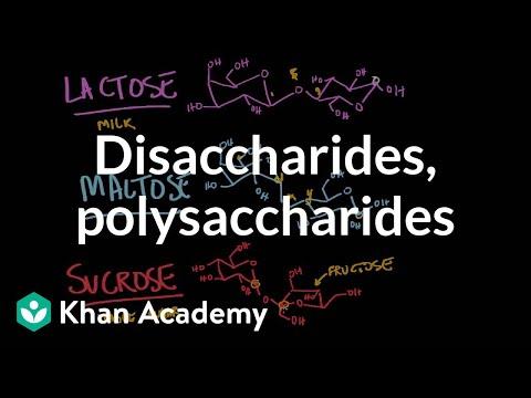 Disaccharides and polysaccharides | Chemical processes | MCAT | Khan Academy