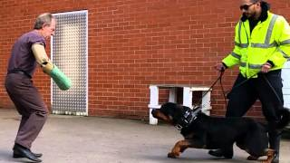 Uk Security Dogs Rottweiler Vs Malinois