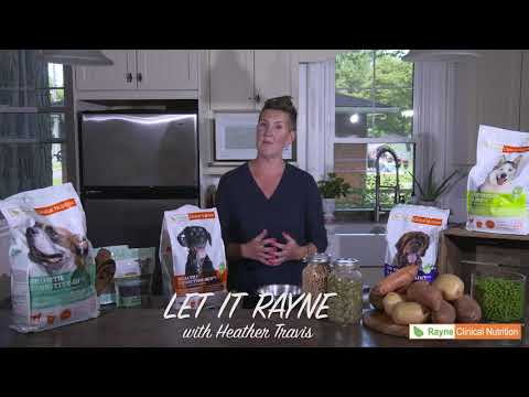 Let it Rayne with Heather Travis - How Much to feed your dog. (8)