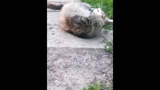 Кошке плохо