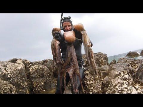 Podvodni ribolov - sretni petak 13.05.2016. Lov na hobotnice