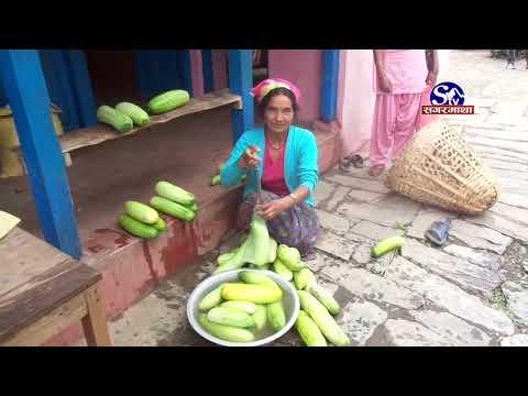 कृषिमा वृहत म्याग्दी जिल्ला (Myagdi District's Agriculture) Cover By Sagarmatha Tv