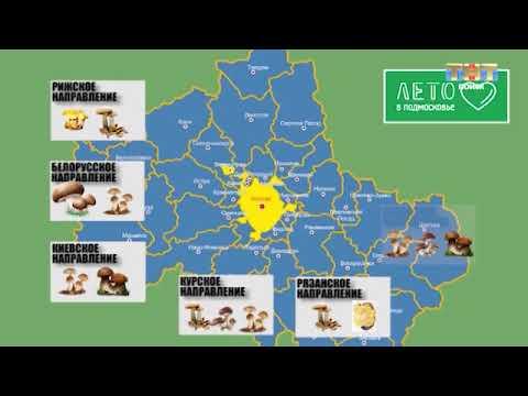 ТНТ-Поиск: Карта грибных мест от активистов проекта «Лето в Подмосковье»