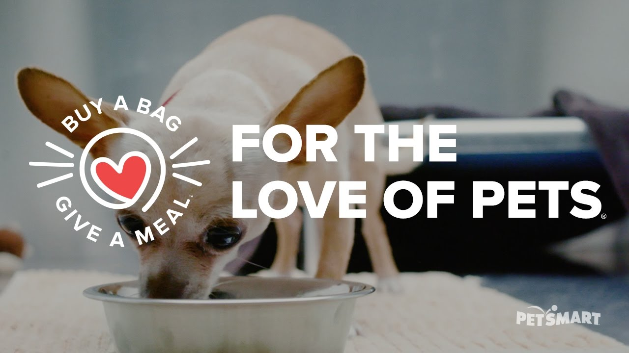 PetSmart Introduces Buy A Bag, Give A Meal - Teaser (US) - YouTube