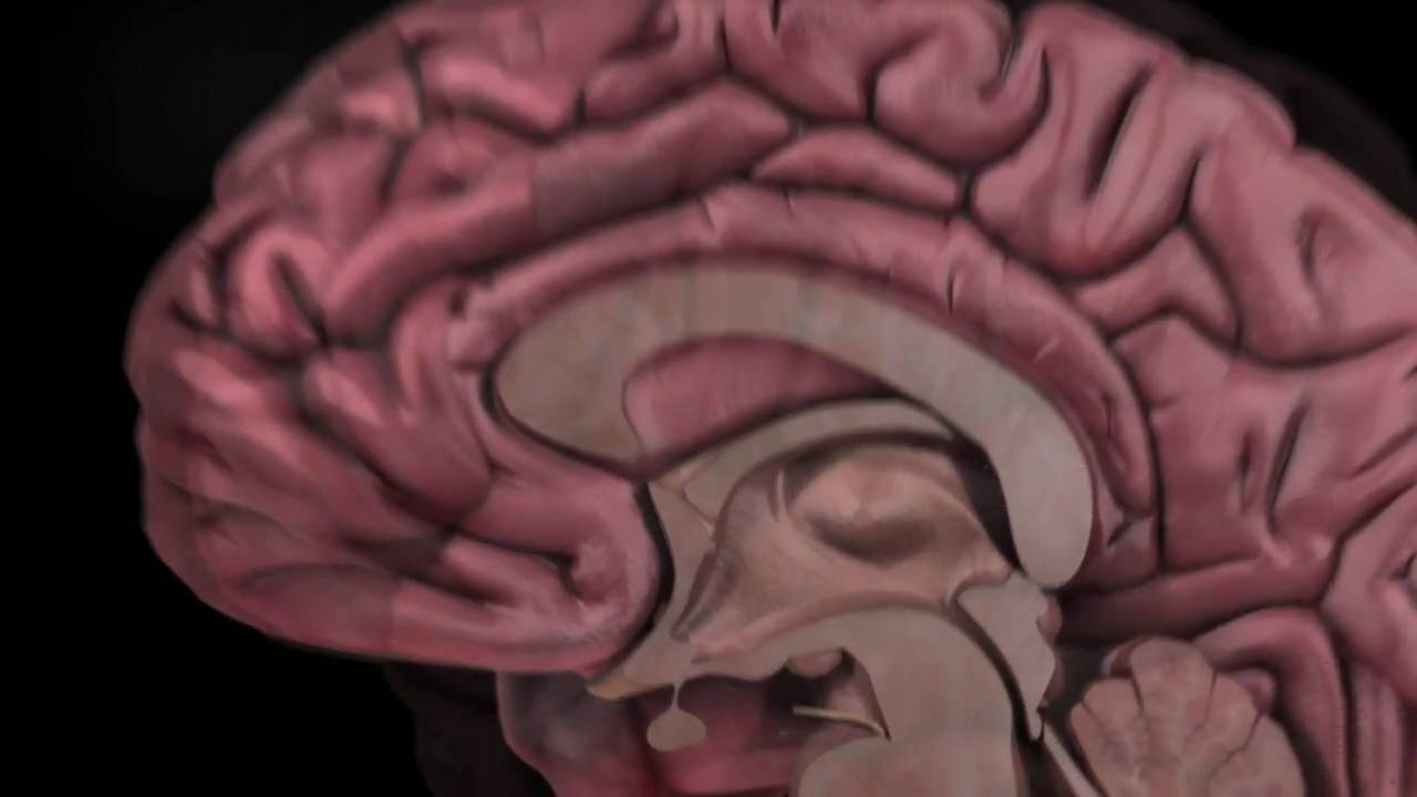 The Human Brain: How We Decide - YouTube