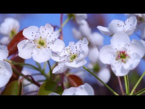 الدنيا ربيع.. هل تعرف فعلا تاريخ بداية أجمل الفصول؟  - نشر قبل 9 دقيقة